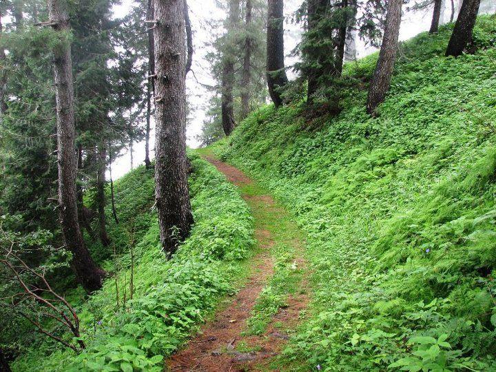 Murree-Kotli Sattian-Kahuta National Park