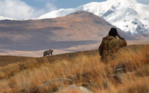 Home of The Himalayan brown bears-Deosai National Park