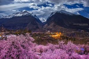 Cherry Blossom Hunza Package