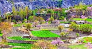Hunza Valley Cherry Blossom Tour