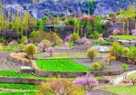 5 Days Cherry Blossom Trip To Hunza Valley