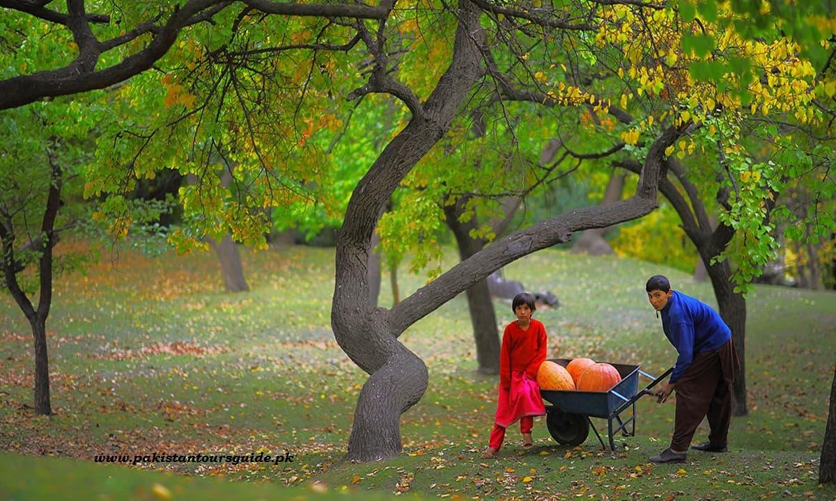 Royal Garden, Hunza.